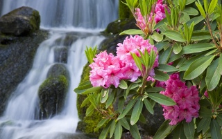 Spring Flowers and Waterfall wallpapers and stock photos