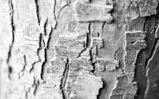 Tree Bark Macro wallpapers and stock photos