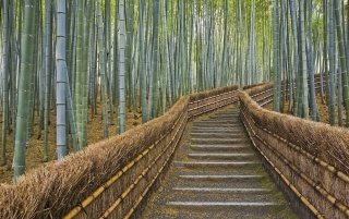 Bamboo Forest wallpapers and stock photos