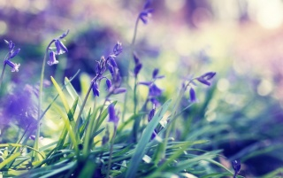 Purple Spring Flowers wallpapers and stock photos
