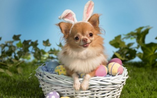 Easter Doggie wallpapers and stock photos