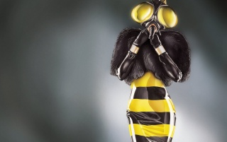 Wasp Illustration wallpapers and stock photos