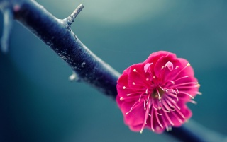 Pink Flower on Branch wallpapers and stock photos