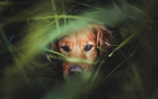 Dog in Grass wallpapers and stock photos