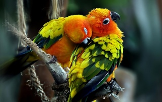 Parrots wallpapers and stock photos