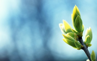Plantas de Primavera wallpapers and stock photos