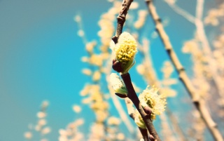 Spring Buds wallpapers and stock photos