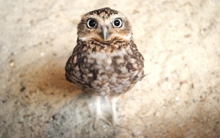 Owl Close-up wallpapers and stock photos