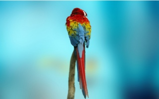 Coloured Parrot wallpapers and stock photos