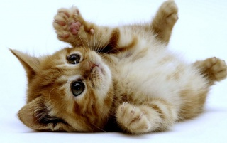 Super Cute Kitten wallpapers and stock photos