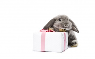 Osterhase und Geschenk wallpapers and stock photos