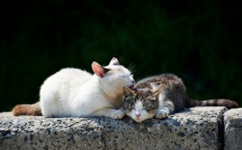 Cats Sleeping wallpapers and stock photos