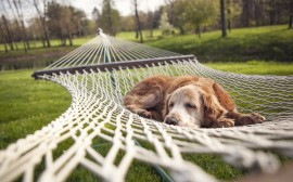 Dog Relaxing wallpapers and stock photos