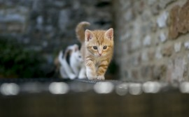 Kittens on Fence wallpapers and stock photos