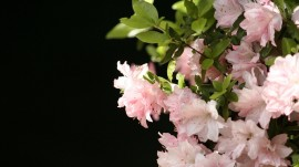 Spring Flowers wallpapers and stock photos