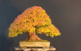 Random: Bonsai Tree
