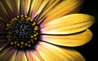 Yellow Flower Macro wallpapers and stock photos
