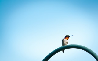 Lonely Hummingbird wallpapers and stock photos