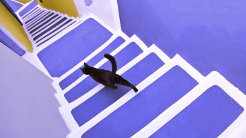 Black cat on violet stairs wallpapers and stock photos