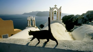 Random: Black cat on the church roof in Greece