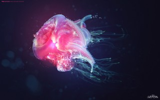Jelly Fish wallpapers and stock photos