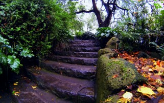 Wet Garden Stairs wallpapers and stock photos