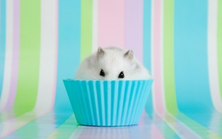 Hamster Muffin wallpapers and stock photos