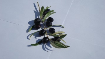 Random: Olive Branch with Olives