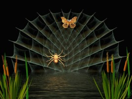 Spider & Butterfly wallpapers and stock photos