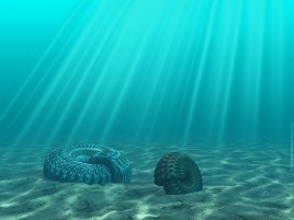 Sea Bottom wallpapers and stock photos
