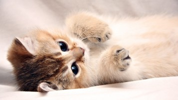 Kitten Cute Paws wallpapers and stock photos