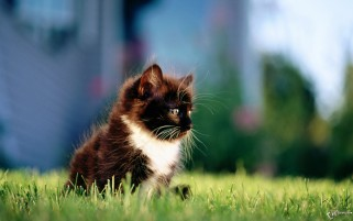 Kitten in the Grass wallpapers and stock photos
