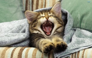 Kitten Yawns wallpapers and stock photos