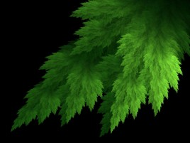 Fractal Leaf wallpapers and stock photos
