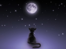 Moon Cat wallpapers and stock photos