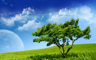 Serenity Tree wallpapers and stock photos