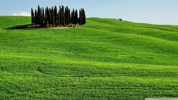 Cypress on Hill wallpapers and stock photos