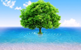 Ocean Tree wallpapers and stock photos