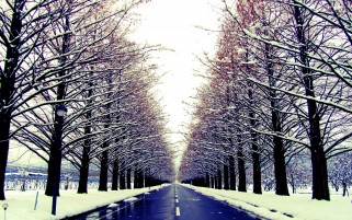Random: Winter Avenue