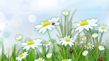 Chamomile & Lady Bugs wallpapers and stock photos