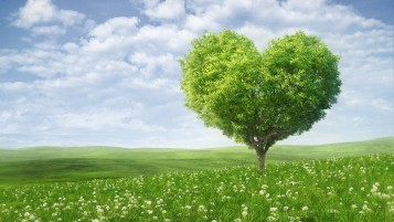 Nature Heart wallpapers and stock photos
