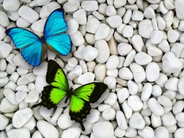 Blue & Green Butterfly wallpapers and stock photos