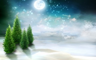 Winter Ever Greens At Night wallpapers and stock photos