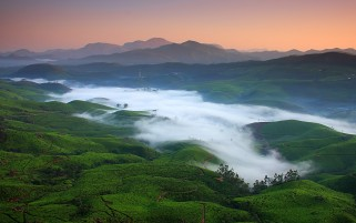 Fog Over Tea Fields wallpapers and stock photos