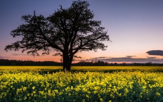 Black Tree & Yellow Flowers wallpapers and stock photos
