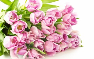 Tulip Bouquet wallpapers and stock photos