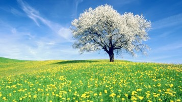 Time Of Spring wallpapers and stock photos