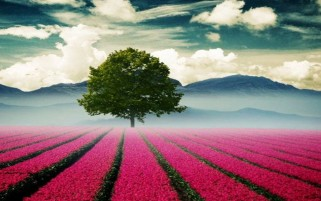 Beautiful Sight wallpapers and stock photos