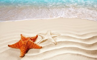 Random: Orange Sea Star