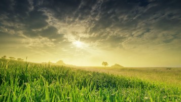 Sunrise Over Green Field wallpapers and stock photos